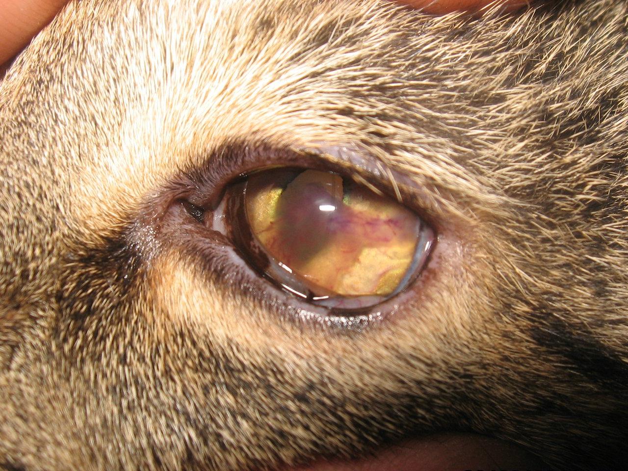 Бельмо на глазу - Симптомы и 43