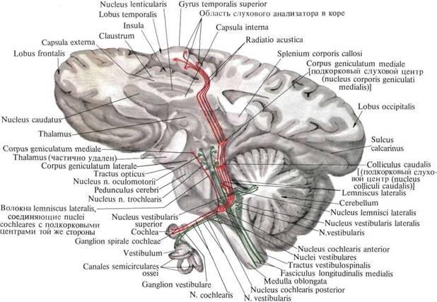 200401.65 Биотехнические и