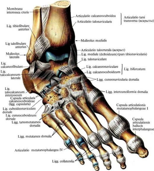 народные средства для суставов для ног