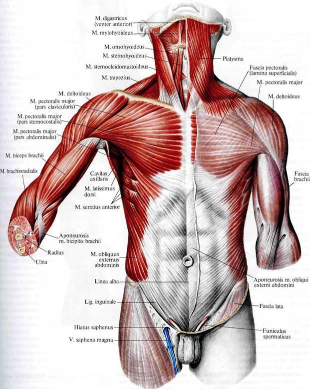 того, что почему образуются ямочки на треугольной мышце под губам термобелье счёт