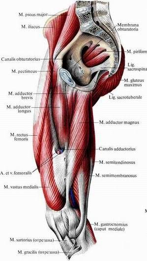 мышц и суставных капсул на