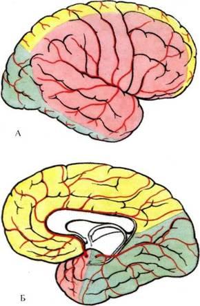 Рис. 750.  Области кровоснабжения полушарий большого мозга (схема).  А - верхнелатеральная поверхность.