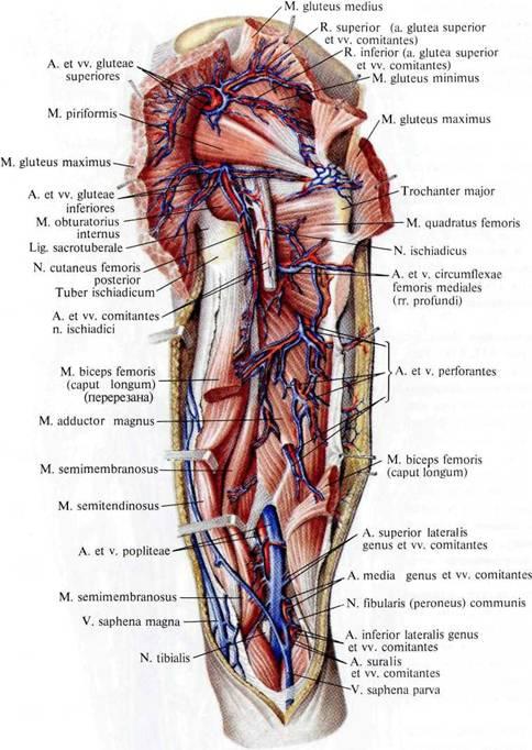Варикоз прямой кишки симптомы