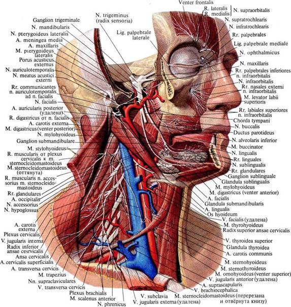 Нервные головные боли: симптомы и как снять напряжение