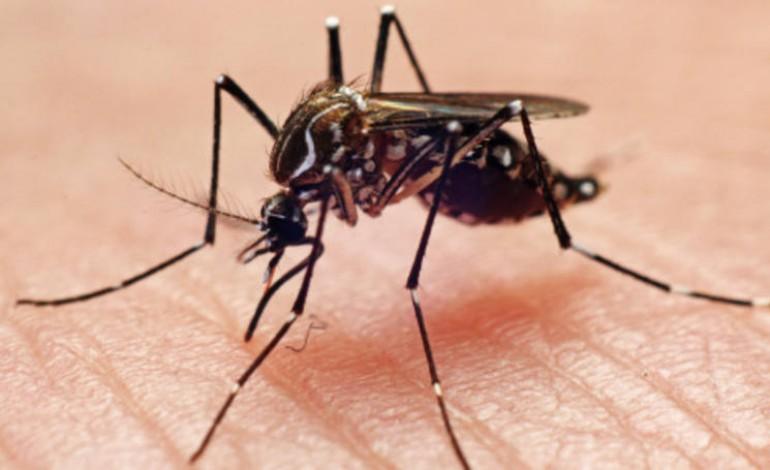 Вирус Зика в Бразилии
