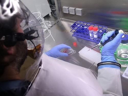 Испытания средств от вируса Эбола срываются