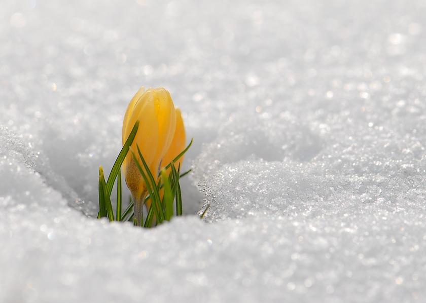 Картинки с весной и зимой
