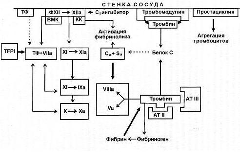 антикоагулянта гепарина