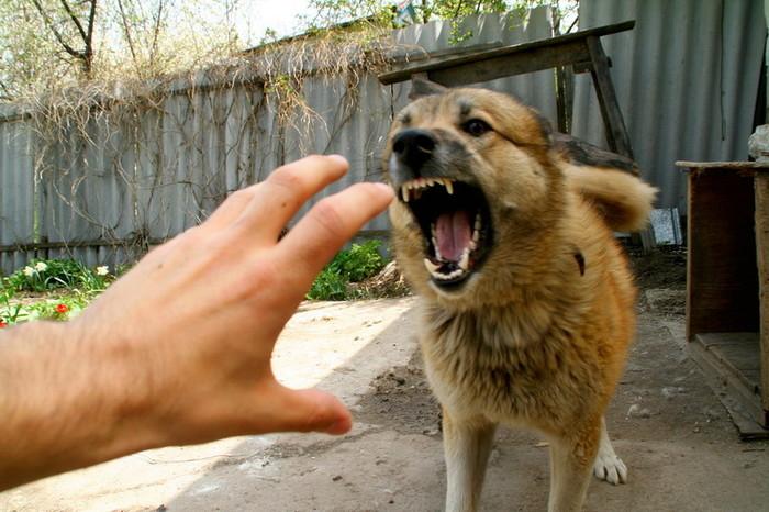 Домашние животные могут заразить бешенством