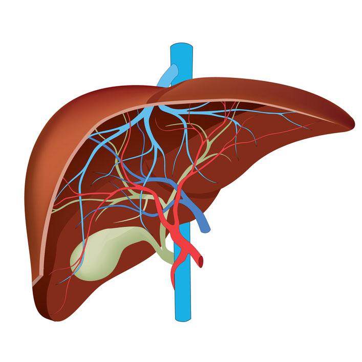иммунная система при хроническом остеомиелите: