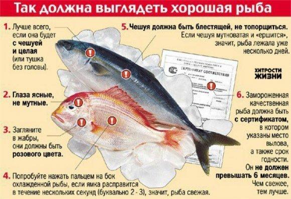 Надо ли замораживать рыбу