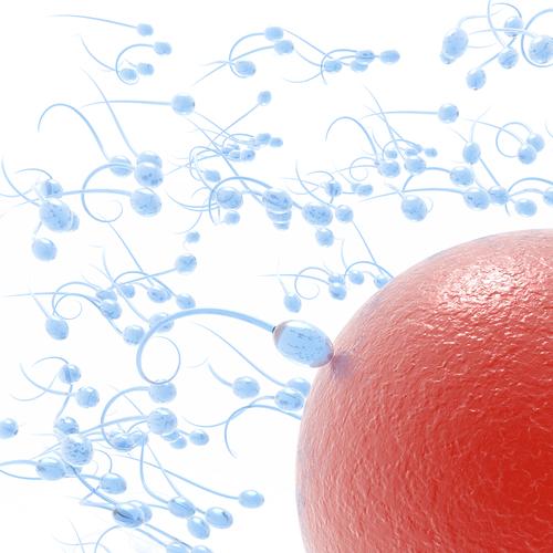 kak-uluchshit-kolichestvo-zhivih-spermatozoidov