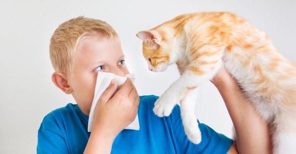причина аллергии на молоко