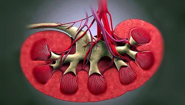 arterialnaya-gipertoniya-eto-test