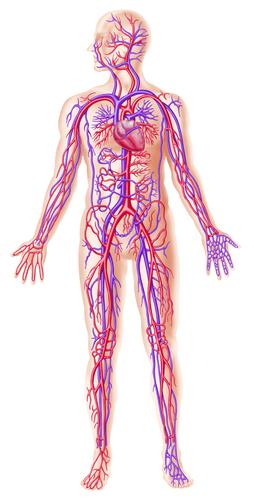 повышение холестерина крови лечение