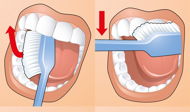 Как чистить зубы:Движения щеткой по внутренней и внешней поверхности зубов