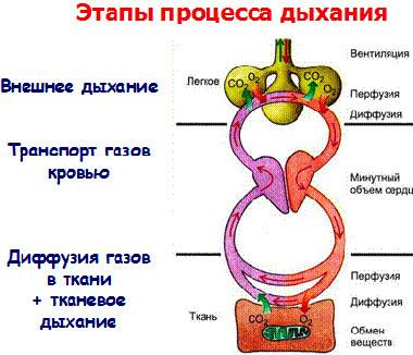 Газовый анализ артериальной крови Справка из наркологического диспансера Окружная