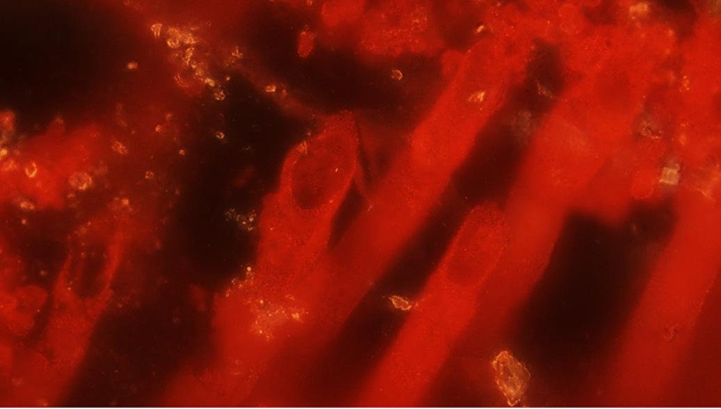 Найдены древнейшие граждане Земли возрастом вмиллиарды лет