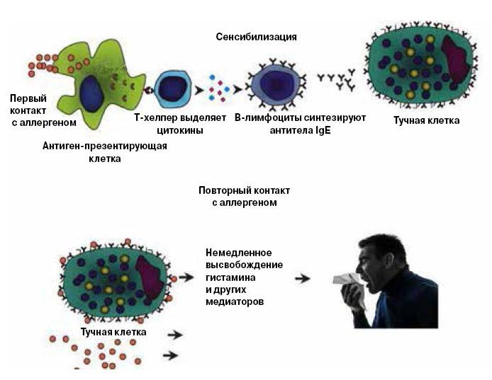 асит терапия от аллергии отзывы