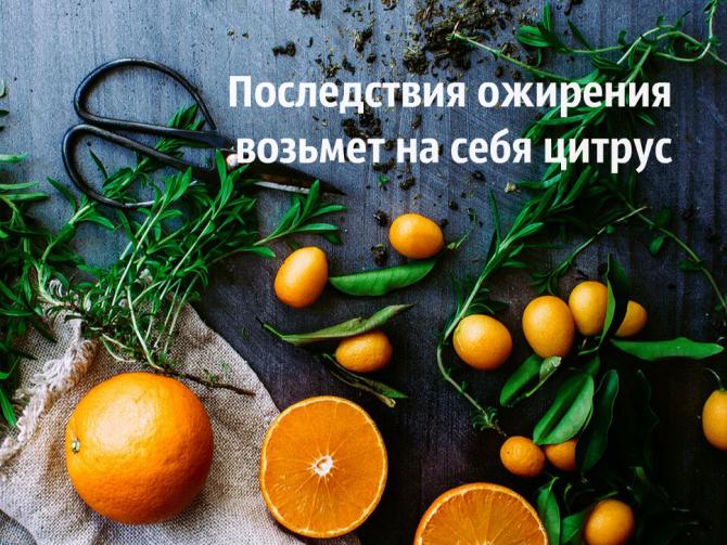 Ученые: Цитрусовые фрукты помогут вборьбе сожирением
