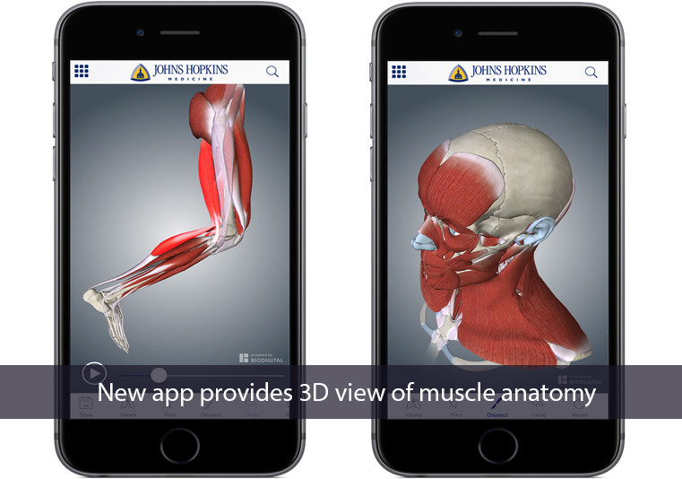 Hopkins Muscle Anatomy 3D