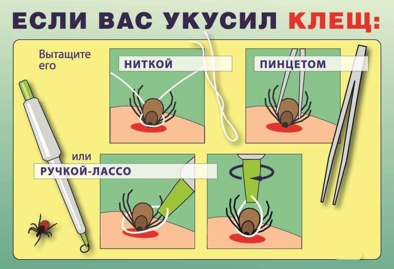 профилактика и лечение от паразитов