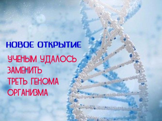 Учёные Китая создали синтетические дрожжевые хромосомы