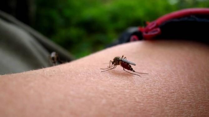 Укусы насекомых как лечить в домашних условиях