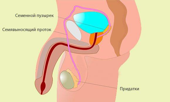Кишка сперма вред