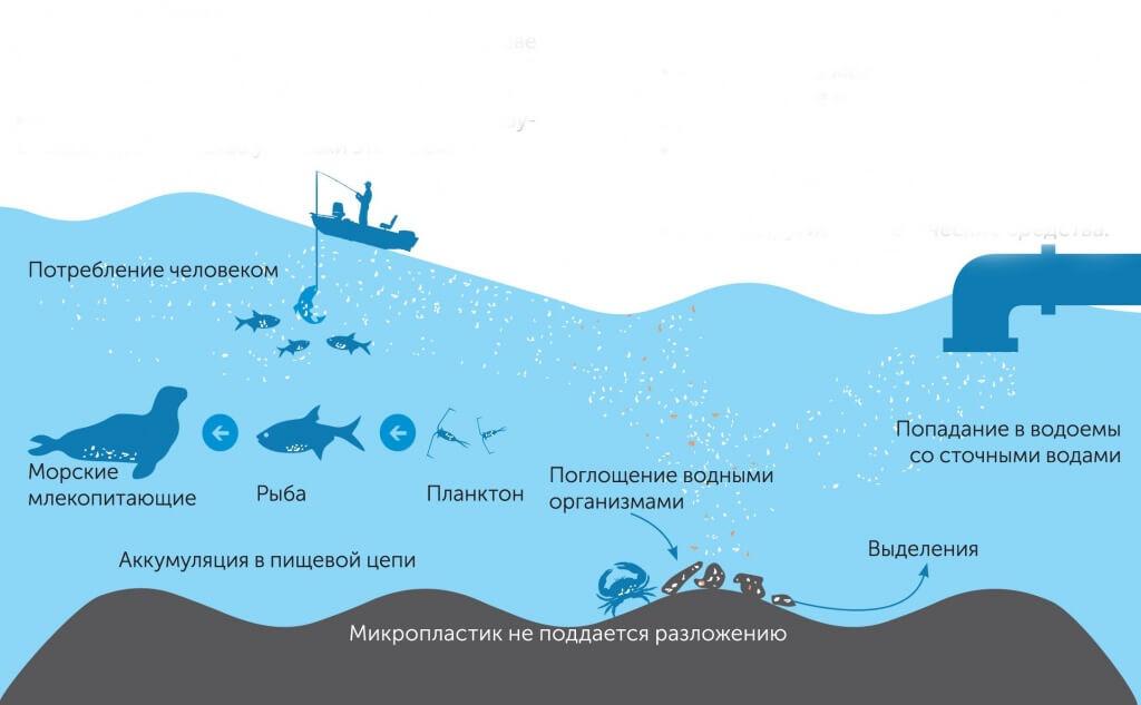 Микропластик в рыбе