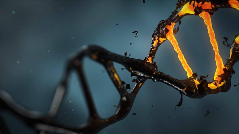 анализ митохондриальной ДНК