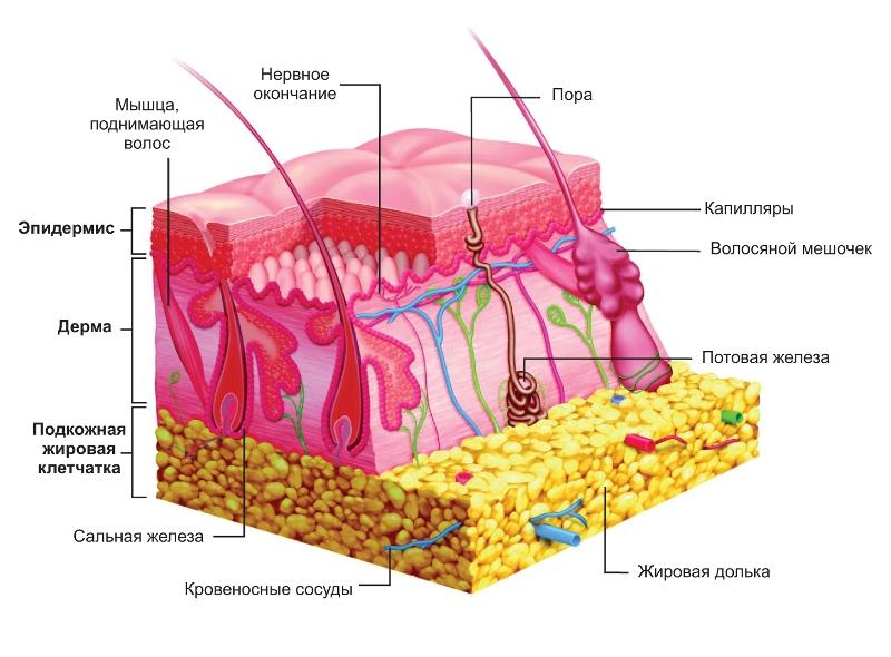 Панникулит - лечение болезни