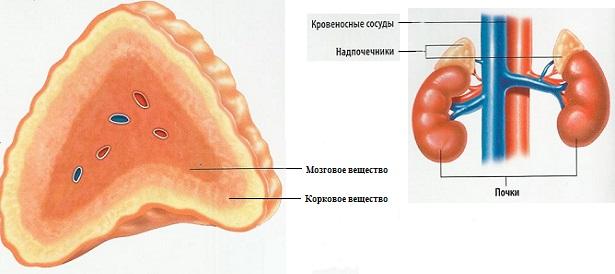 болезнь аддисона фото