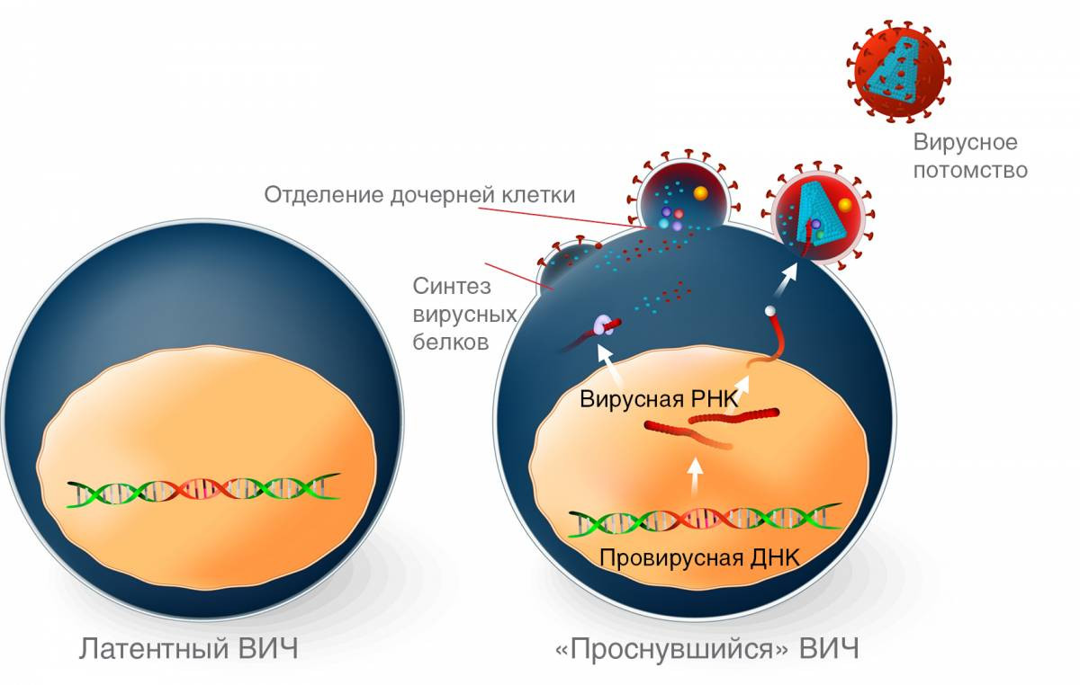 ВИЧинфекция и СПИД Симптомы признаки лечение и